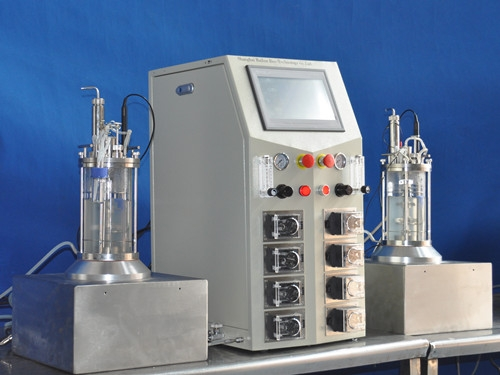 two conjoined glass  fermenter|bioreactor( magnetic sttirring)